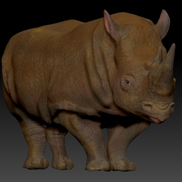 white rhinoceros l197 animate 3D model