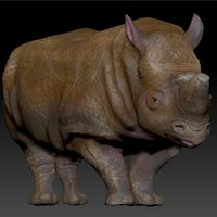 3D model white rhinoceros l201 animate