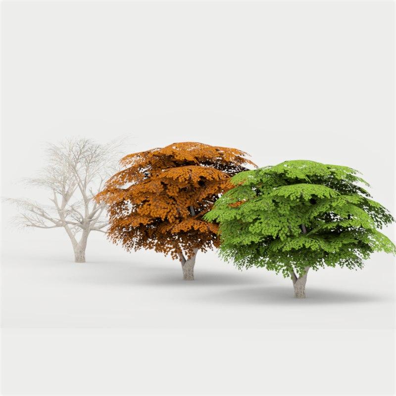 maple tree 02 3D