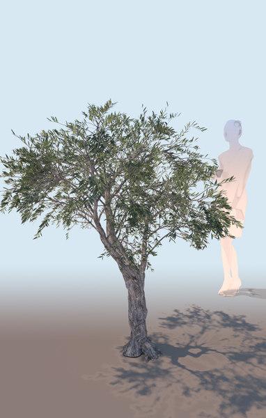 decorative olive tree olea 3D model