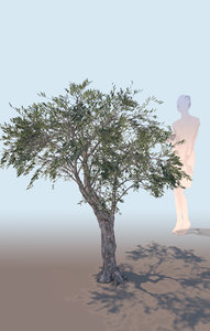 decorative olive tree olea 3D model