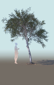 3D young olive tree olea