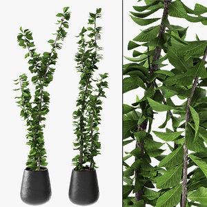 3D exotic plant pot - model