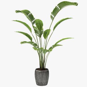 tropical palm exotic pot plant model