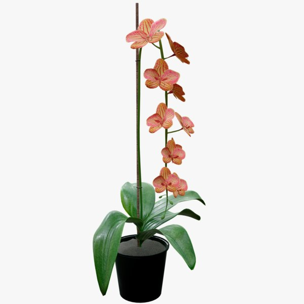 3D realistic orange orchid plant