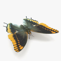 butterfly charaxes jasius 3D model