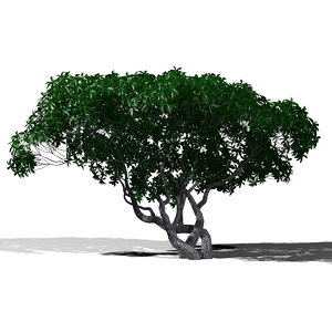 umbrella tree 3d ma
