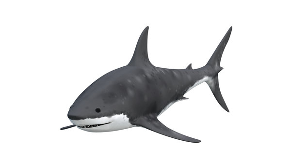 3D great shark