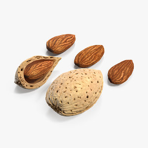 almonds nuts seed 3D model