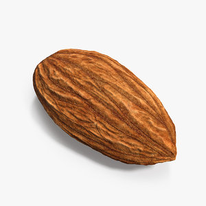 3D almond nut fruit
