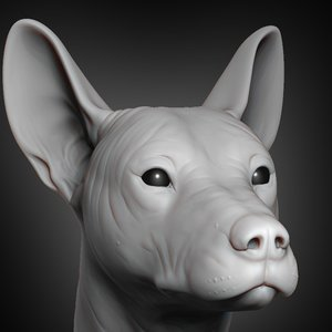 3D mexican hairless dog head