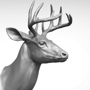 3D model white-tailed deer - virginia