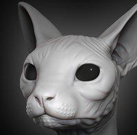 Sphynx Cat Head 2019
