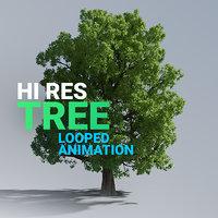 Hi Res Tree Looped Animation