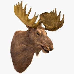 3D moose head