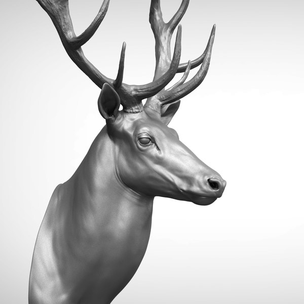 3D reed deer stag elk model