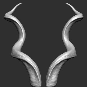 greater kudu horns 3D model