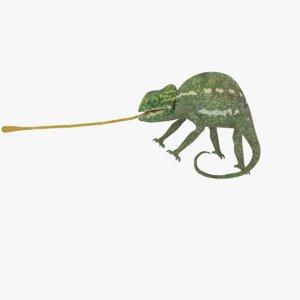 chameleon format 3D model