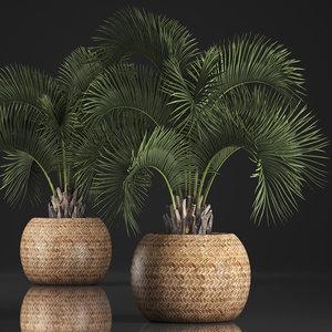 exotic plants palm model
