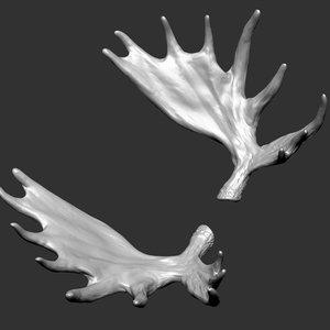3D model moose horns