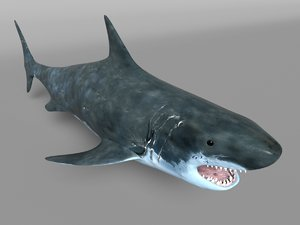 3D tiburon shark model