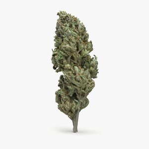 sour diesel cannabis bud model