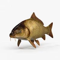3D carp fish animal model