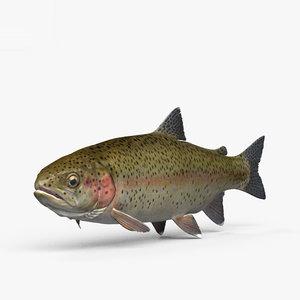 3D model trout fish