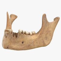 human jawbone mandible 01 3D model