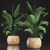 banana palm pot model