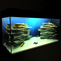 3D cichlid aquarium