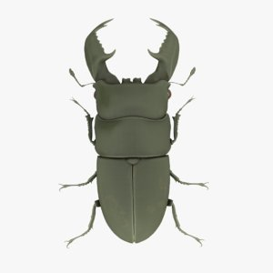 3D stag beetle rubber toy model