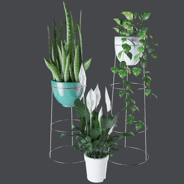 3D plants indoor house model