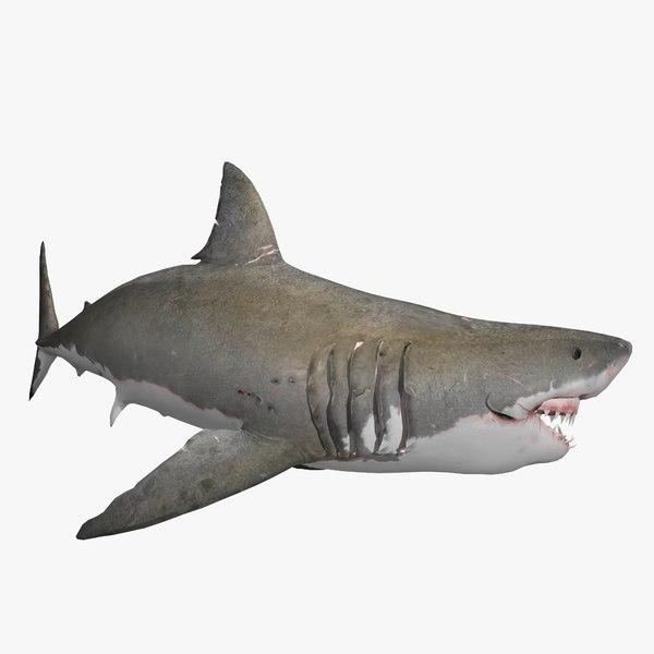 great white shark animal 3D model