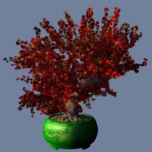 3D bonsai red maple model