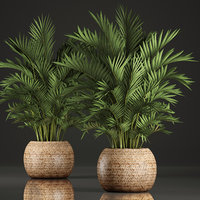decorative palms howea 3D model