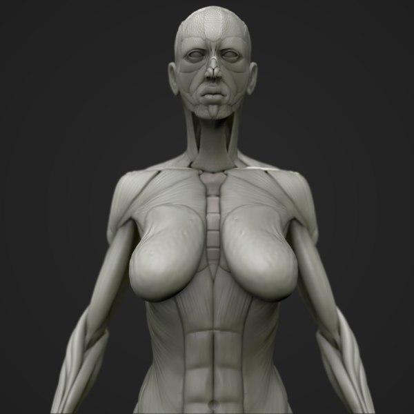 3D body skeleton anatomy model