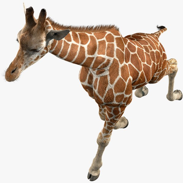 3D realistic giraffe fur tongue animation