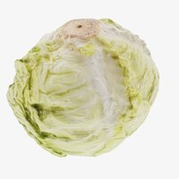 3D cabbage vegetable food model