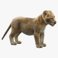 3D model lion cub