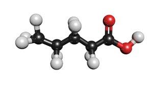 valeric acid molecule c5h10o2 model