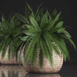 houseplants fern model