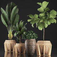 Collection of Exotic plants 348