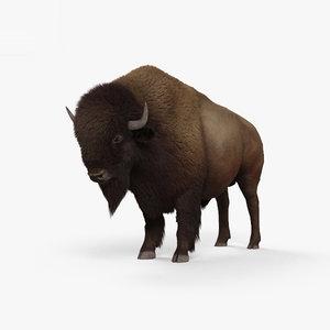 bison american buffalo 3D model