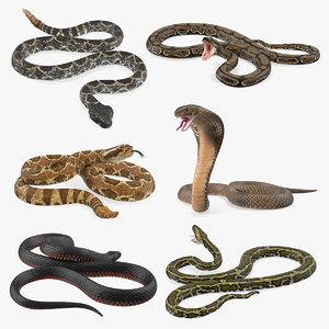 3D rigged snakes 4