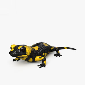 salamander amphibian animal 3D model