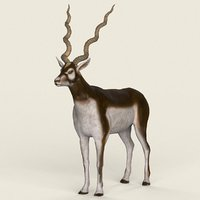 ready realistic antelope 3D model