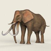 3D ready realistic elephant