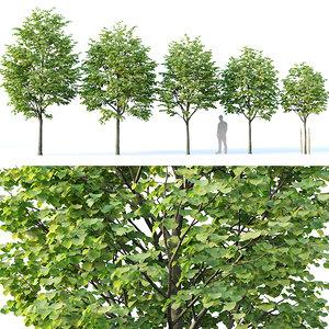 3D model tilia trees