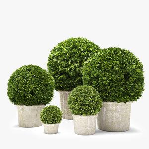 boxwood trees 3D model